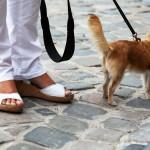 dogs&heels